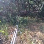 Fallen tree on top of lines