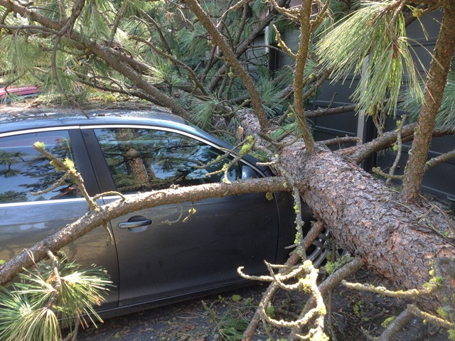 tree fallen on a car hood
