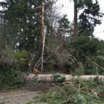 messed up roadway and lines in Olympia with trees everywhere