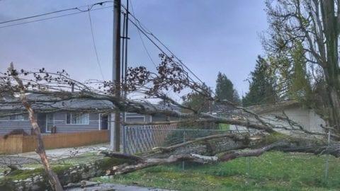 Storm repair update: Nov. 14, 2017