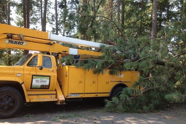 tree service removing large tree