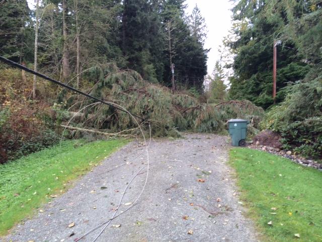 windstorm damage in Monroe