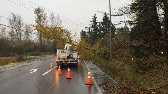 tree over road in Puyallup